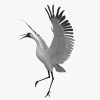 grus americana whooping crane animation 3d obj