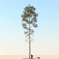 3d realistic pine tree
