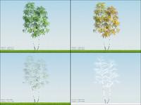 free max mode 4 season tree birch004
