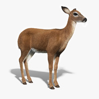 3d white tailed doe fur