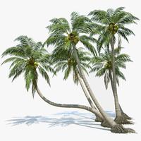 3d coconut palms set plants
