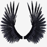 3d model realistic wings rigged