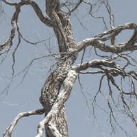 free max mode leaf season tree