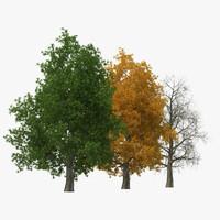 Yellow Poplar Old Tree Set