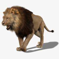 Lion (3) (Animated) (Fur)