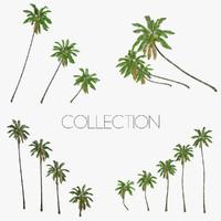 3d model coconut palm trees