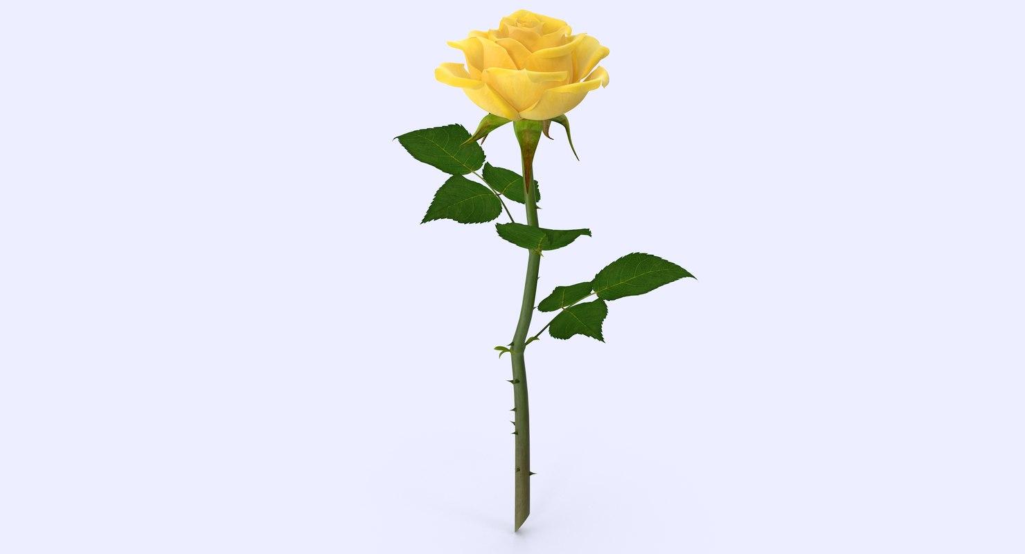 rose modeled max