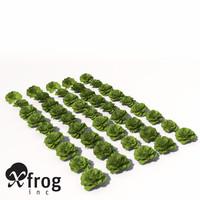 XfrogPlants Lettuce