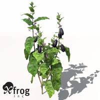 XfrogPlants Eggplant