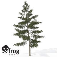 xfrogplants eastern white pine 3d model