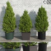 realistic pinus trees pots 3d max