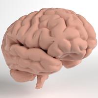 Anatomy - Human Brain (Cerebrum, Cerebellum, Brain Stem) (PBR, UV-unwrapped)