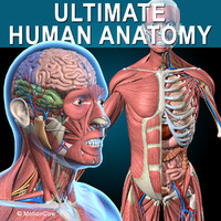 3d human anatomy ultimate
