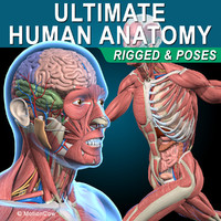 Ultimate Human Anatomy ( Rigged )
