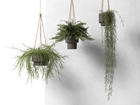 3d model hanging pots plants